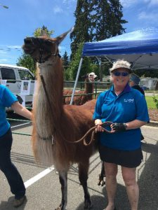 Dr. Komarow and her llamas enjoyed the carnival too!